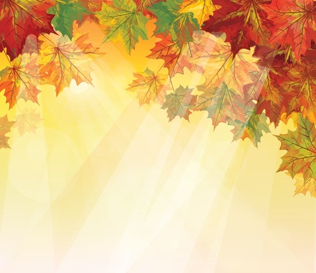 autumnal leaves on yellow background Stock Vector - 15773930
