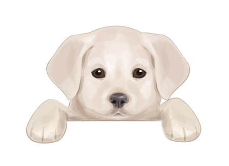 labrador retriever: cute puppy hiding by blank  Illustration