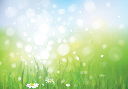 camomiles macro: Vector of spring background, sky and grass  Illustration