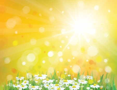 golden daisy: Vector of sky background with white chamomiles Illustration