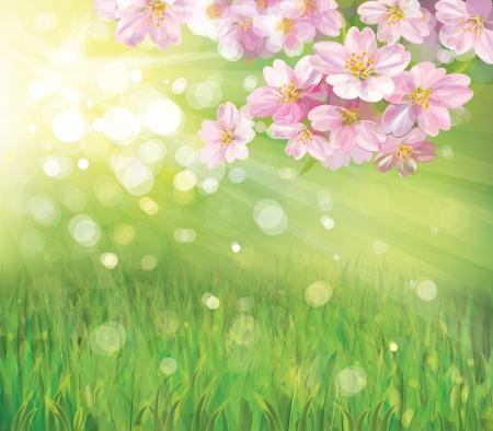 꽃이 만발한: 녹색 배경에 봄 꽃이 만발한 나무의 벡터 일러스트