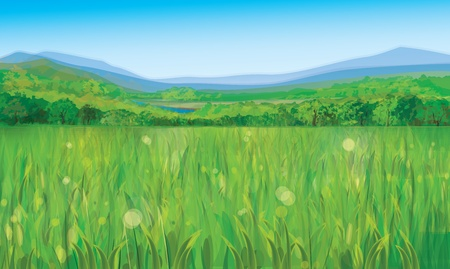 Vector of summer landscape Stock Vector - 17776974