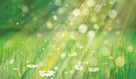 spring background with white daisies Stock Vector - 18180245
