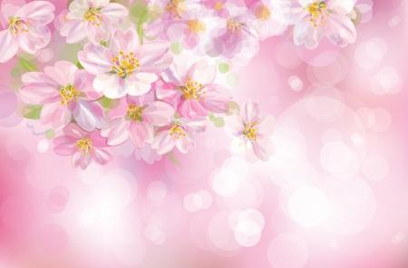 꽃이 만발한: 분홍색 배경에 나무 꽃이 만발한 봄의 벡터