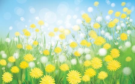 blinking: Vector de fondo de la primavera con dientes de le�n blancos Vectores