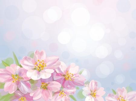 꽃이 만발한: 사과 나무의 봄 꽃이 만발한 꽃의 벡터 일러스트
