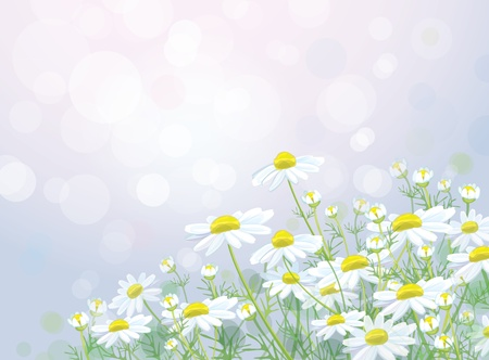 camomiles macro: Vector of spring background