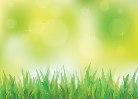 spring background with green grass Stock Vector - 18419403