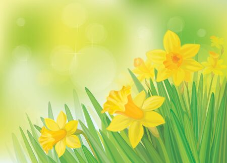 Vector of daffodil flowers on spring  background