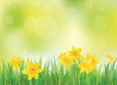 steam of a leaf:  Vector of daffodil flowers on spring background Illustration