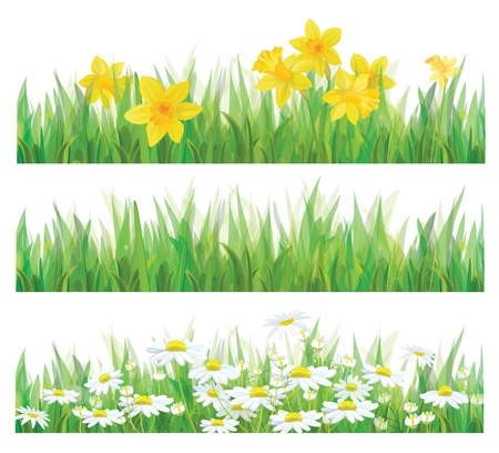 Daffodil flowers, grass and chamomiles isolated for spring and Easter design