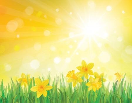 Narcyz kwiaty na tle wiosny