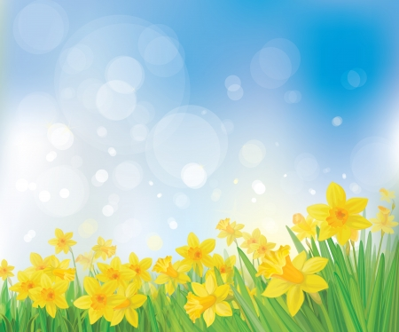 Vector of daffodil flowers on spring background   Illustration