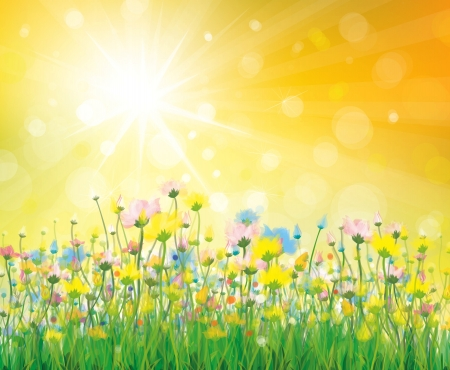 sunbeams: Colorful flowers on sunny background