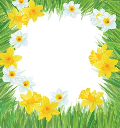 Vector of daffodil flowers frame for spring, Easter s design  Vector