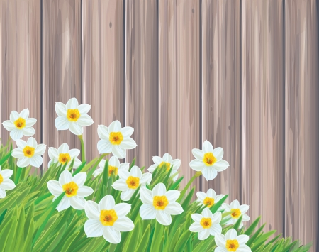 steam of a leaf: Vector of daffodil flowers on wood background  Illustration