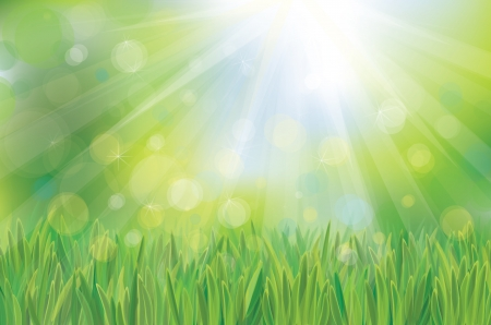 blue sky and fields:  Vector of spring background, sky and green grass  Illustration
