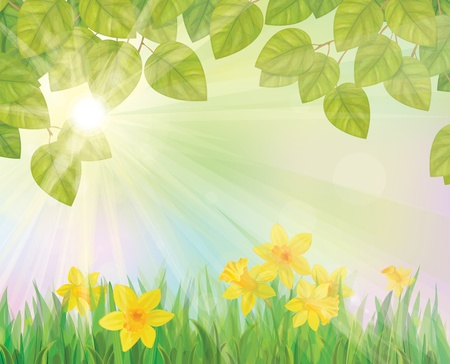 steam of a leaf: Vector of daffodil flowers on spring background