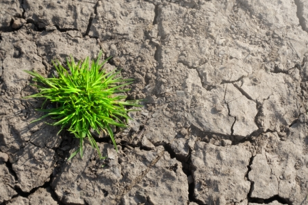 Green grass growing on dry soil  photo