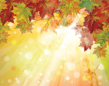 Vector of autumnal leaves on sunny background Stock Vector - 20591430