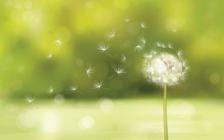 Vector of spring background with white dandelion. Vector
