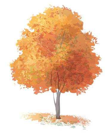 autumn trees: Vector autumnal tree