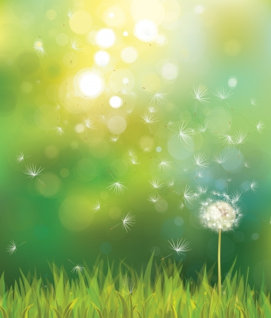 dandelion flower: Vector of spring background with white dandelion.
