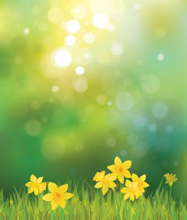 spring background: Vector of daffodil flowers on spring background.
