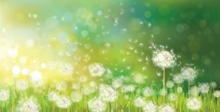 白いタンポポと春の背景のベクトル