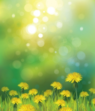 Vector of spring background with yellow dandelions   Vector
