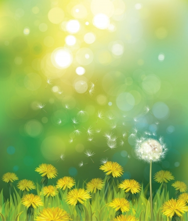 dandelion flower: Vector of spring background with dandelions