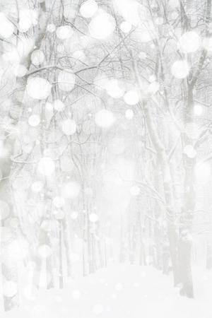 winter wonderland: Paesaggio invernale   Archivio Fotografico