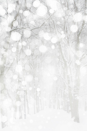 bosque con nieve: Paisaje de invierno  Foto de archivo