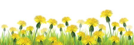 Vector yellow dandelions isolated  Vector