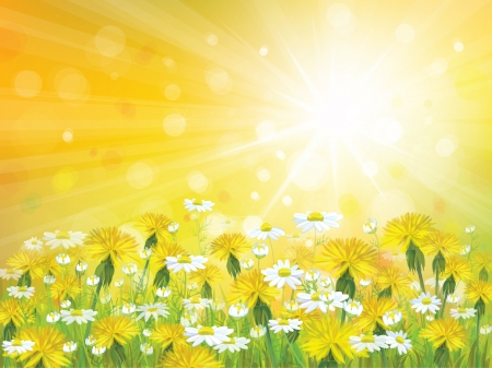 dandelion field: Vector sunshine background with yellow chamomiles and dandelions. Illustration