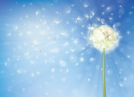 dandelion flower: Vector  dandelion on sky background.