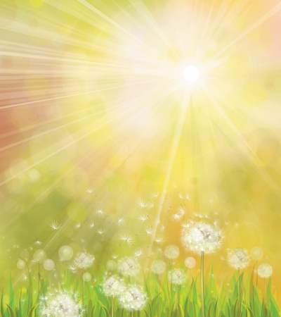 Vector of spring background with white dandelions Stock Vector - 24418790