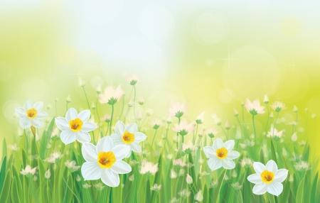 Fiori Vector daffodil sullo sfondo del cielo. Archivio Fotografico - 24558844