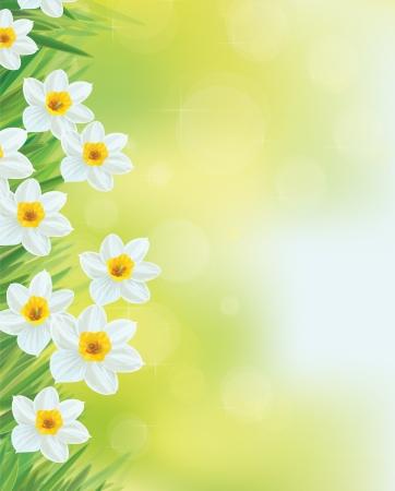 Vector narcis bloemen frame. Stock Illustratie