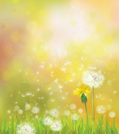 Vector spring background with dandelions.  Vector
