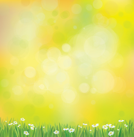 Vector sunshine background with grass and chamomiles.