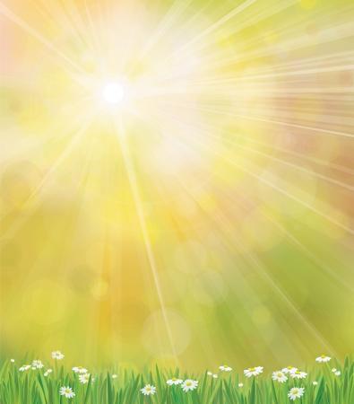 Vector zon achtergrond met gras en chamomiles.