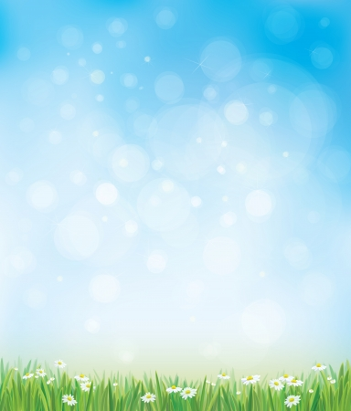 Vector sky background with grass and chamomiles.  Çizim