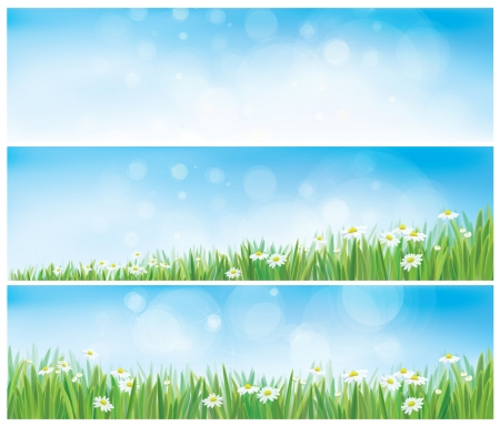 Vector nature backgrounds with sky, grass and chamomiles. Vector