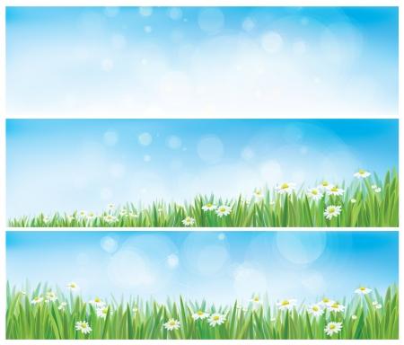 herbe ciel: Vectorielle nature horizons avec le ciel, l'herbe et camomille.