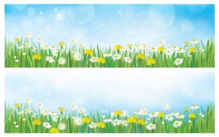 springtime flowers: Vector nature  spring backgrounds.  Illustration