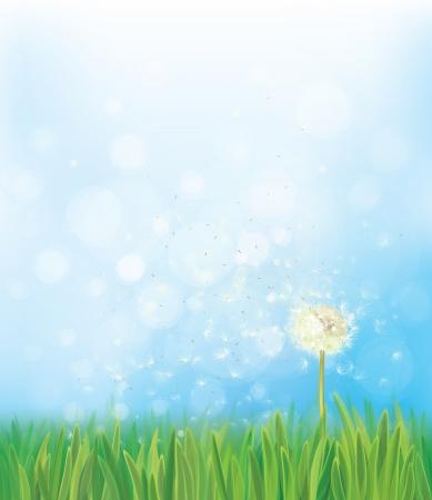 dandelion flower: Vector dandelion on spring  background.