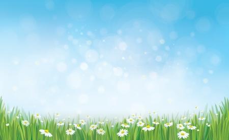 Vector hemel achtergrond met gras en chamomiles.