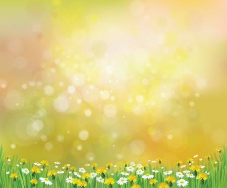 Vector natura sfondo primavera con camomilla e tarassaco Archivio Fotografico - 25125755