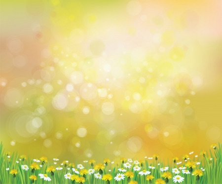 Vector nature spring background with chamomile  and dandelions  Illustration